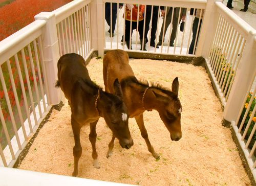 International Exhibition Fair of Turkmen Horse Reflects All Directions of Equestrian Industry