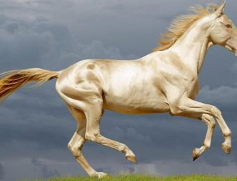 All About Akhal-Teke