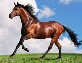 Work Is Underway in Turkmenistan to Study the Population of Steppe Horses